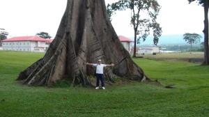 Equatorial Guinea Trees